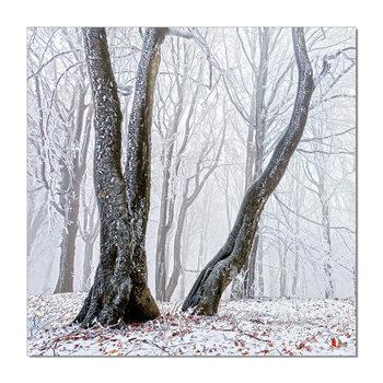 Trees Mounted Art Print