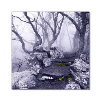 World is not Black and White - Appalachian Trail, Virginia Mounted Art Print