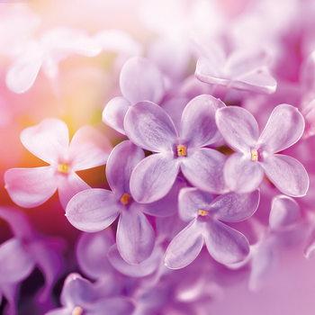 Quadro em vidro Puprle Blossoms