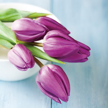 Quadro em vidro Purple Tulipans