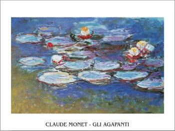 Reprodução do quadro Water Lilies (Agapanthus)