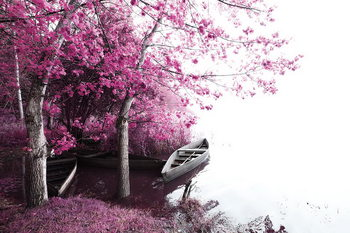 Tableau sur verre Pink World - Blossom Tree with Boat 2