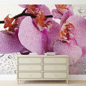 Fleurs Orchidées Gouttes Poster Mural