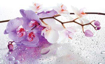 Fleurs Orchidées Nature Gouttes Poster Mural