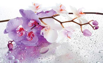 Flowers Orchids Nature Drops Poster Mural