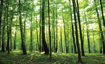Forest Trees Green Nature Poster Mural