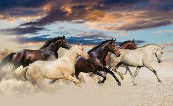 Horses Poster Mural