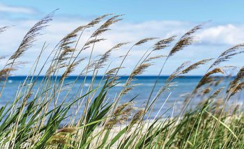 Plage Mer Sable Nature Poster Mural