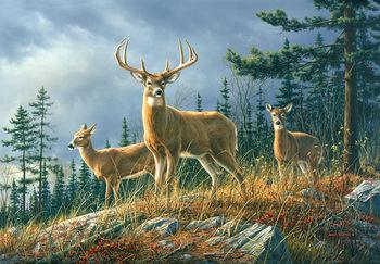 Autumn Animals Wallpaper Mural