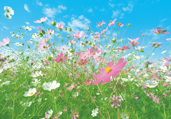 FLOWER MEADOW Wallpaper Mural