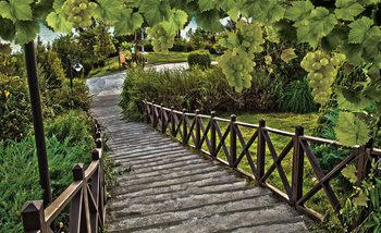 Path Grapes Nature Wallpaper Mural