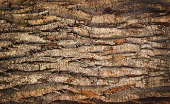 Tree Bark Wallpaper Mural