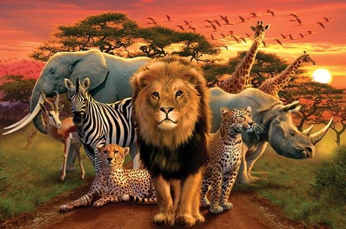 African kingdom Affiche