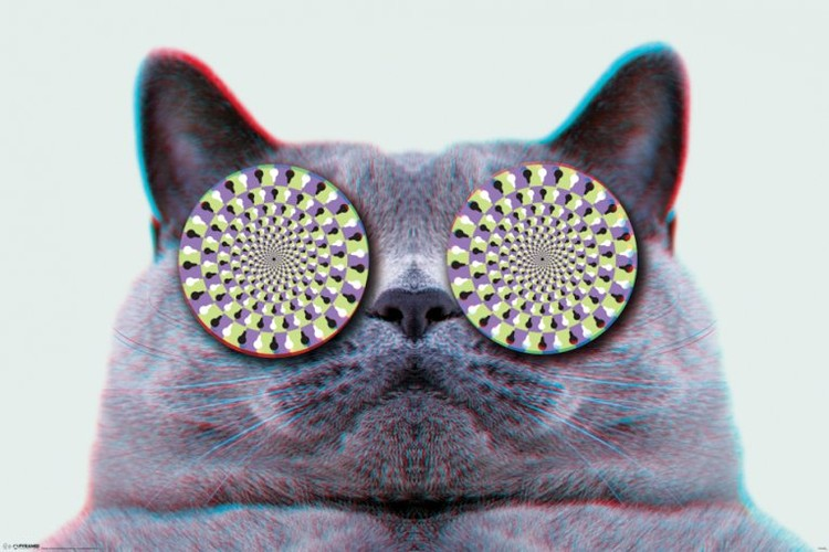 Cats eyes Affiche