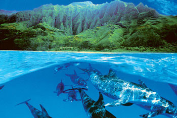 Dolphin island Affiche