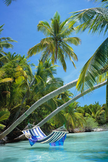 Hammock - tropical beach Poster