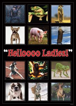 Hellooo ladies ! - montage Affiche