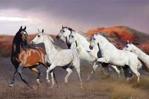 Horses/dusk - bob langrish Affiche
