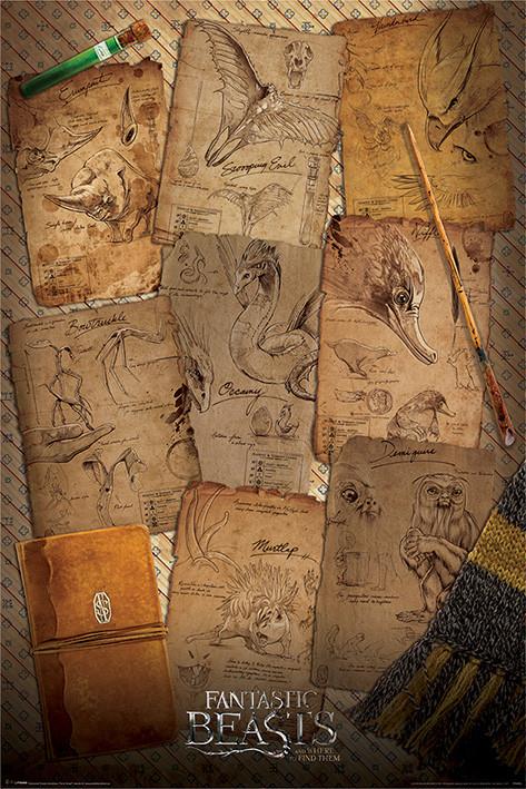 Les Animaux fantastiques - Notebook Pages Affiche