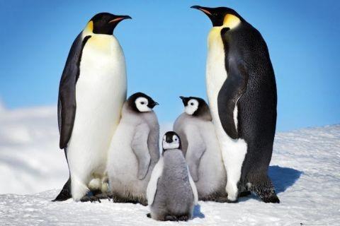 Penguins Affiche