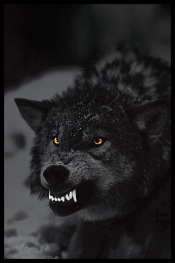 Prowling wolf Affiche
