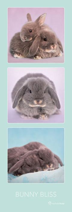 Rachael Hale - bunny bliss Poster