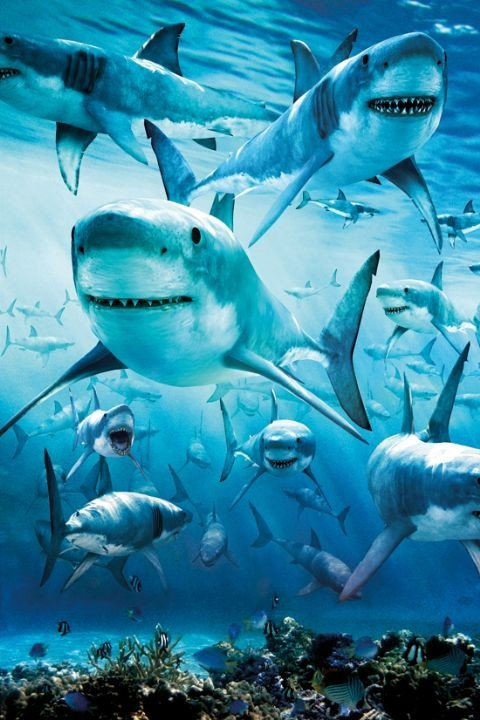 Shark - infested Affiche