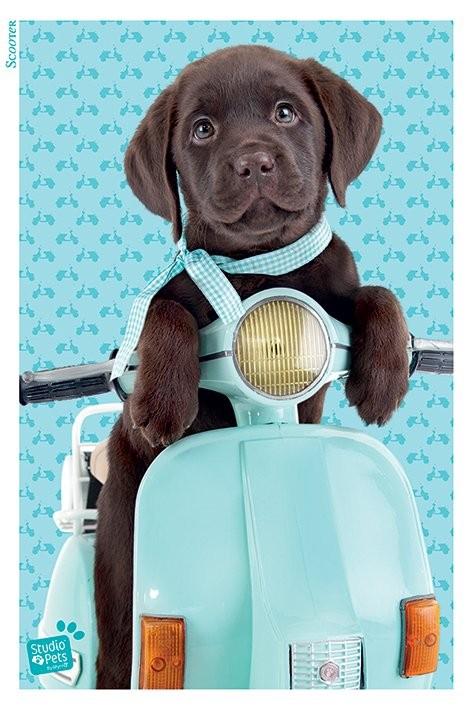 Studio Pets - Scooter Affiche