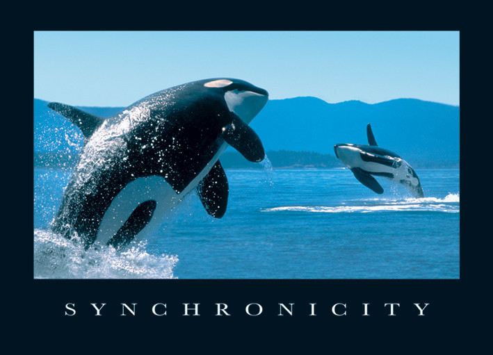 Synchronicity - orcas Affiche