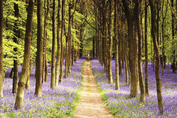 Woodland - path Poster