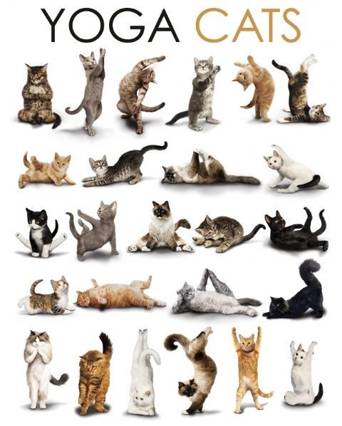 YOGA CATS - compilation Affiche