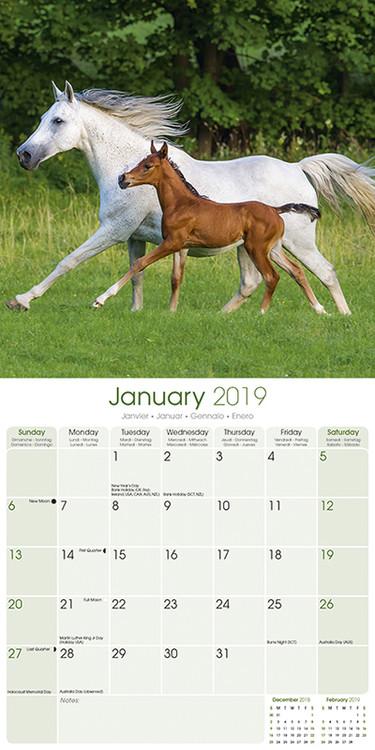 Horse Calendar 2022.Arabian Horses Wall Calendars 2022 Large Selection