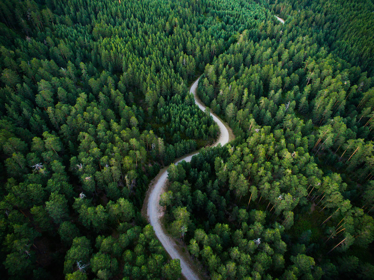 Taide valokuvaus Aerial road crossing the forest