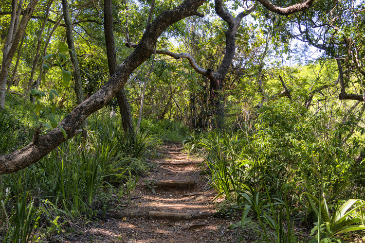 Art Photography African Jungle