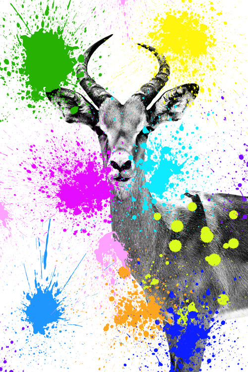 Art Photography Antelope Reedbuck