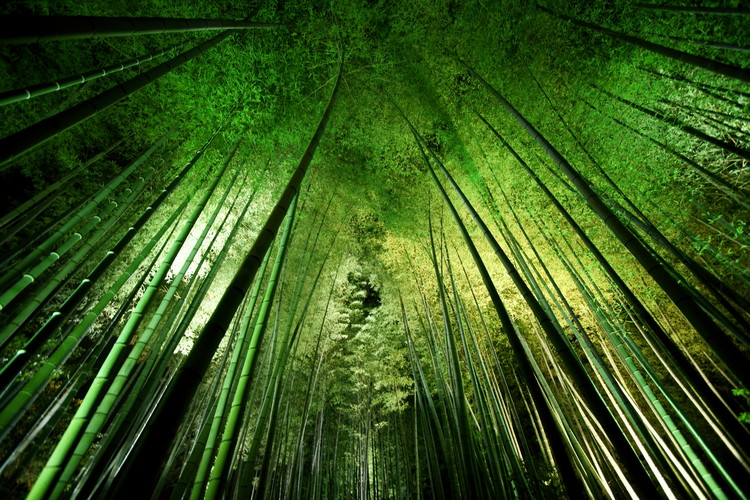 Art Photography Bamboo night