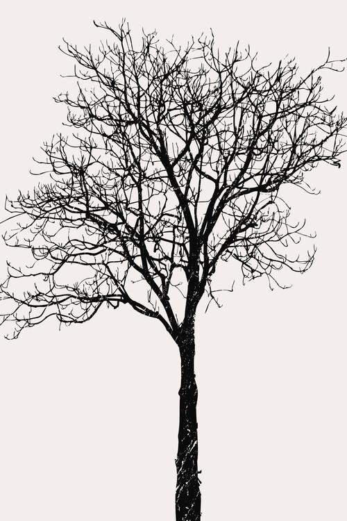 Illustration Black Birch