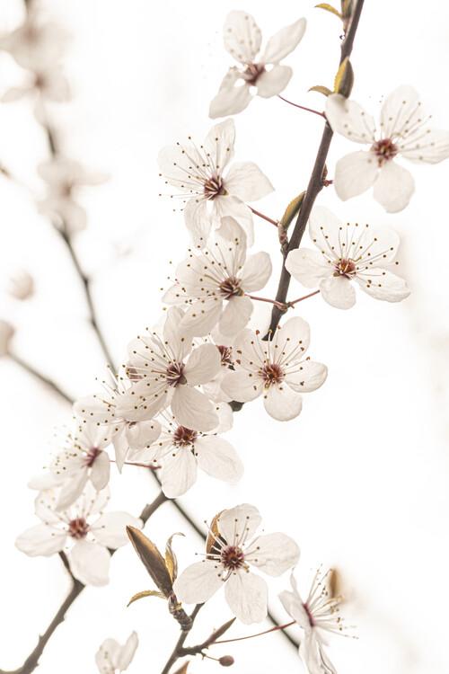 Taide valokuvaus Blossoming