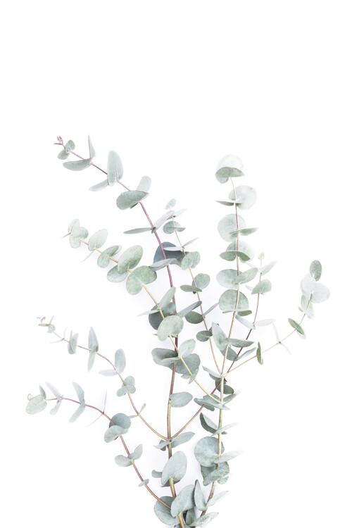 Art Photography Botanical i