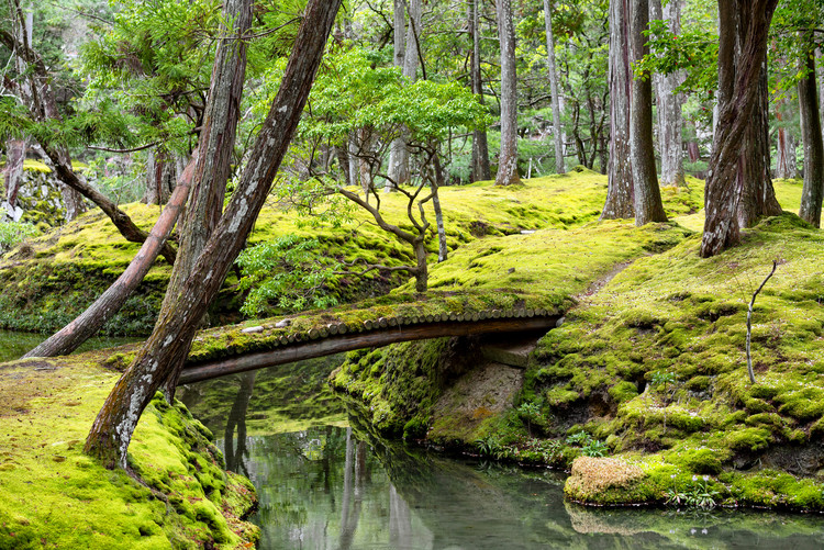 Art Photography Bridge in Moss Garden