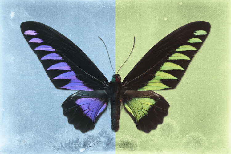 Art Photography BROOKIANA PROFIL - SKYBLUE & LIME GREEN