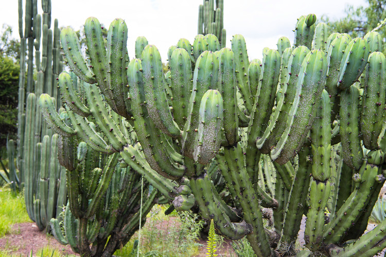 Art Photography Cactus Details II