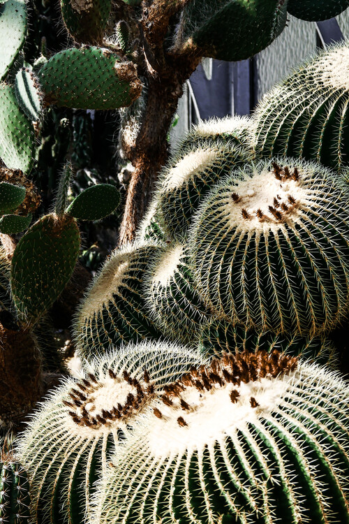Art Photography Cactus