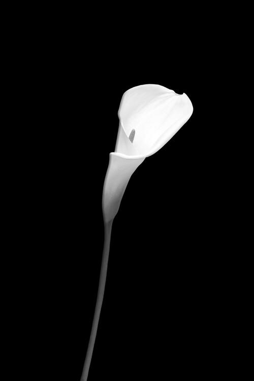 Taide valokuvaus Calla | dark design