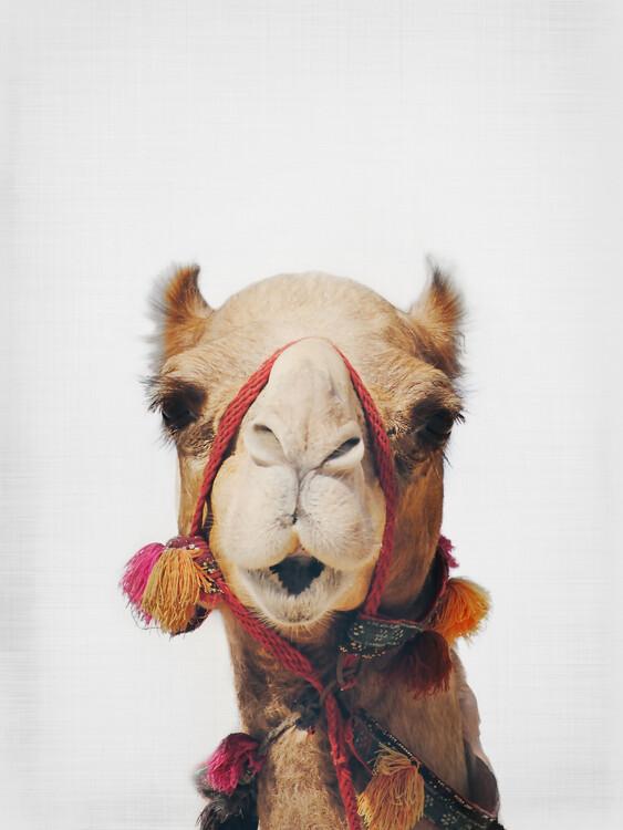 Art Photography Camel
