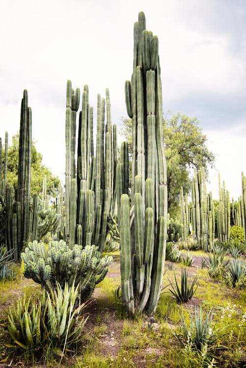 Arte Fotográfica Cardon Cactus II