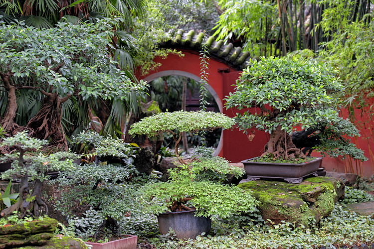 Art Photography China 10MKm2 Collection - Bonsai Trees