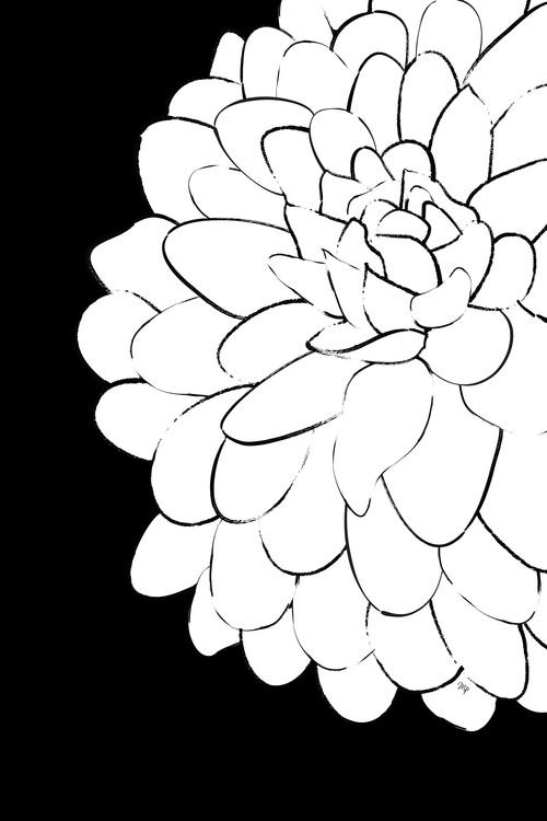 Illustration ChrysanthemumONEbySHP