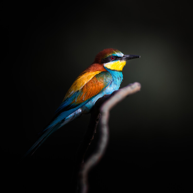 Art Photography Colorful Darkly