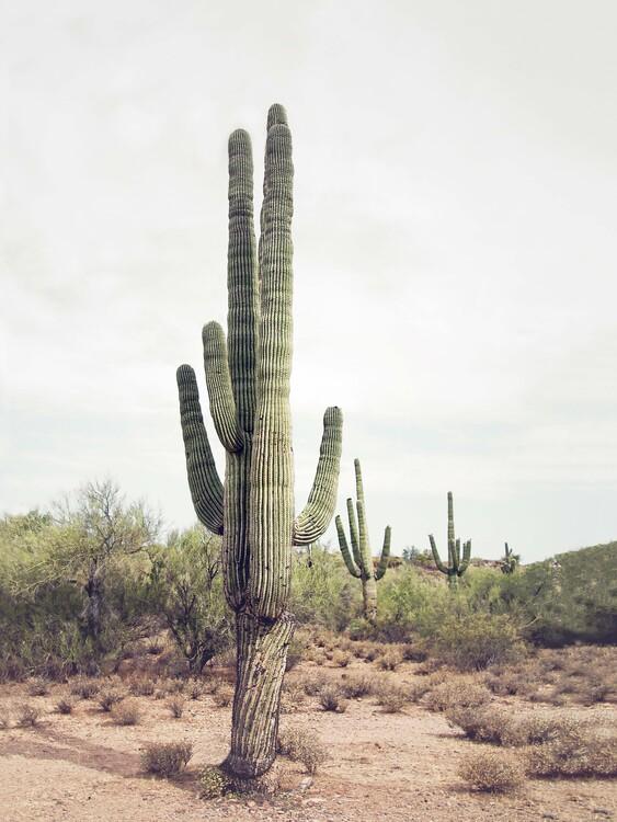 Art Photography Desert Cactus
